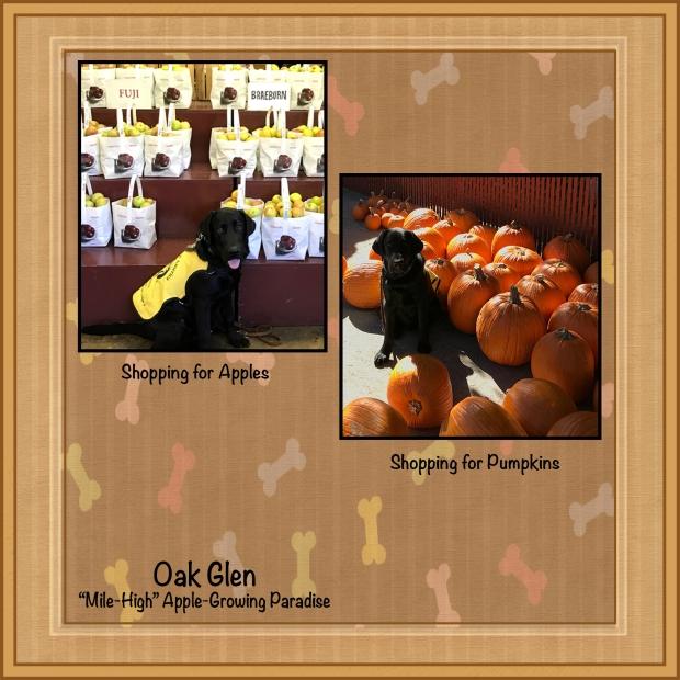07 OakGlennShopping